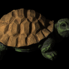 mit_original_turtle