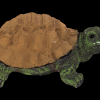mit_reflectance_turtle