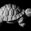 mit_shading_turtle