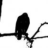 ipiano_segmentation