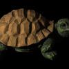 mit_original_turtle