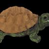 mit_reflectance_turtle